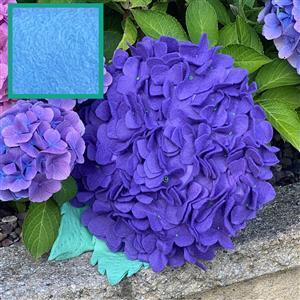Allison Maryon's Hydrangea Cushion Kit Wedgewood Blue & 0.5m Fabric