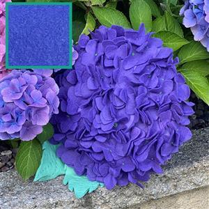 Allison Maryon's Hydrangea Cushion Kit Delphinium Blue & 0.5m Fabric